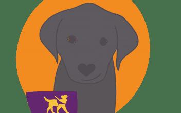Meet Ferro…. onze kantoorhond